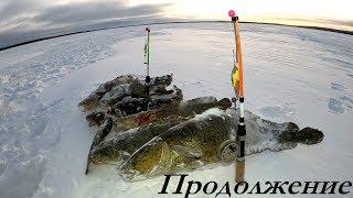 ВЕЧЕРНЯЯ ЛОВЛЯ НАЛИМА НА ОЗЕРЕ BURBOT FISHING ON THE LAKE