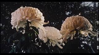 『あつもの 杢平の秋』はビデックスJPで配信中! http://www.videx.jp/d...