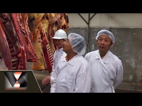Phóng sự :  Thăm hãng thịt ngựa, trâu, nai và bò Canada   Vân Sơn in Canada   Show hè trên xứ lạnh