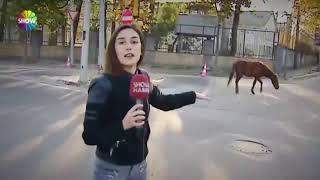 Show TV MUHABİRİNE AT SALDIRISI İŞTE O AN!!!