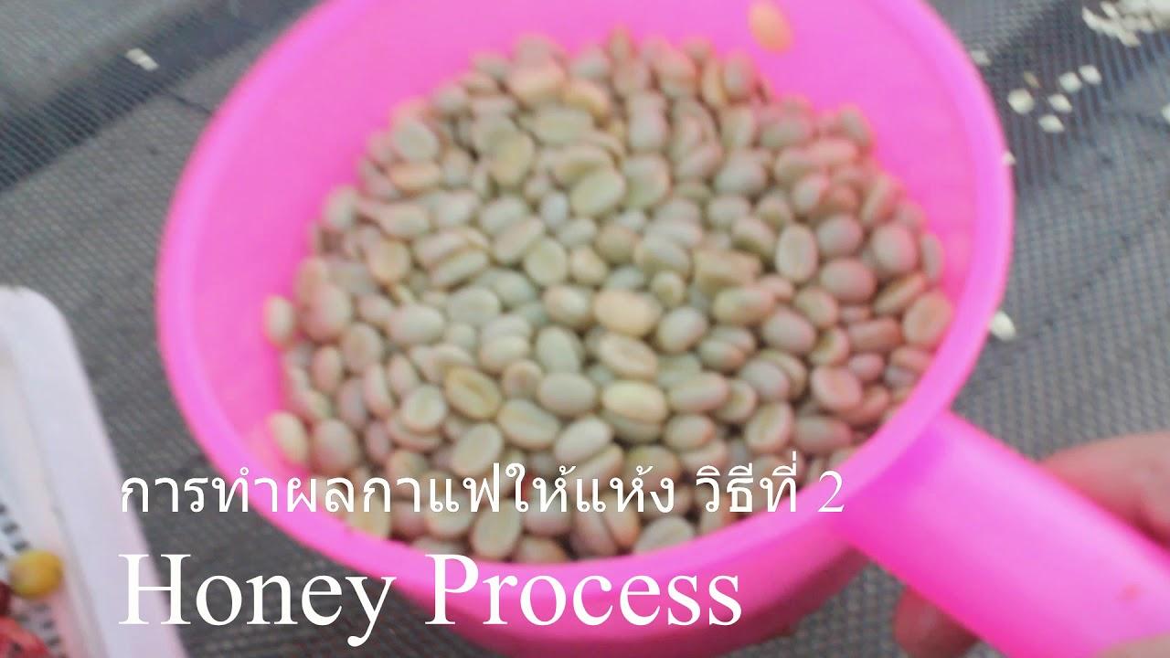 Dry Honey Washed Process กระบวนการทำผลกาแฟให้แห้งก่อนไปคั่ว
