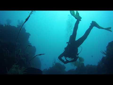 ADI Dives | Saba 2018