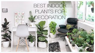 BEST INDOOR PLANTS FOR DECORATION  / HOUSE PLANTS THAT CLEAN AIR AND LOOK BEAUTIFUL IN INDIA