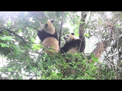 4x4 Freedom Overlander Club - Tibet Trip 2012-15