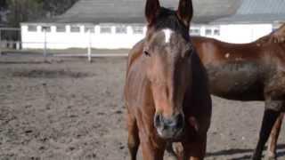 Областной центр олимпийского резерва по конному спорту г. Гомеля. Репортаж 023.by