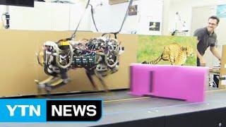 치타 로봇, 눈을 달다…장애물 인식해 '점프' / YTN