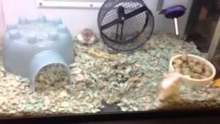 Crazy hamster!!!