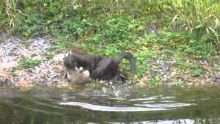 Mink Bac vs first big Rat