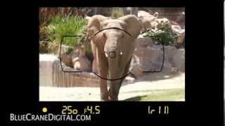Introduction to the Nikon D5300: Basic Controls