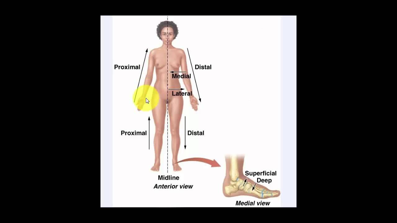 Anatomical Position and Directional Terms - YouTube