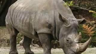 Video IPS SMP Kls7 Persebaran Fauna Indonesia Barat