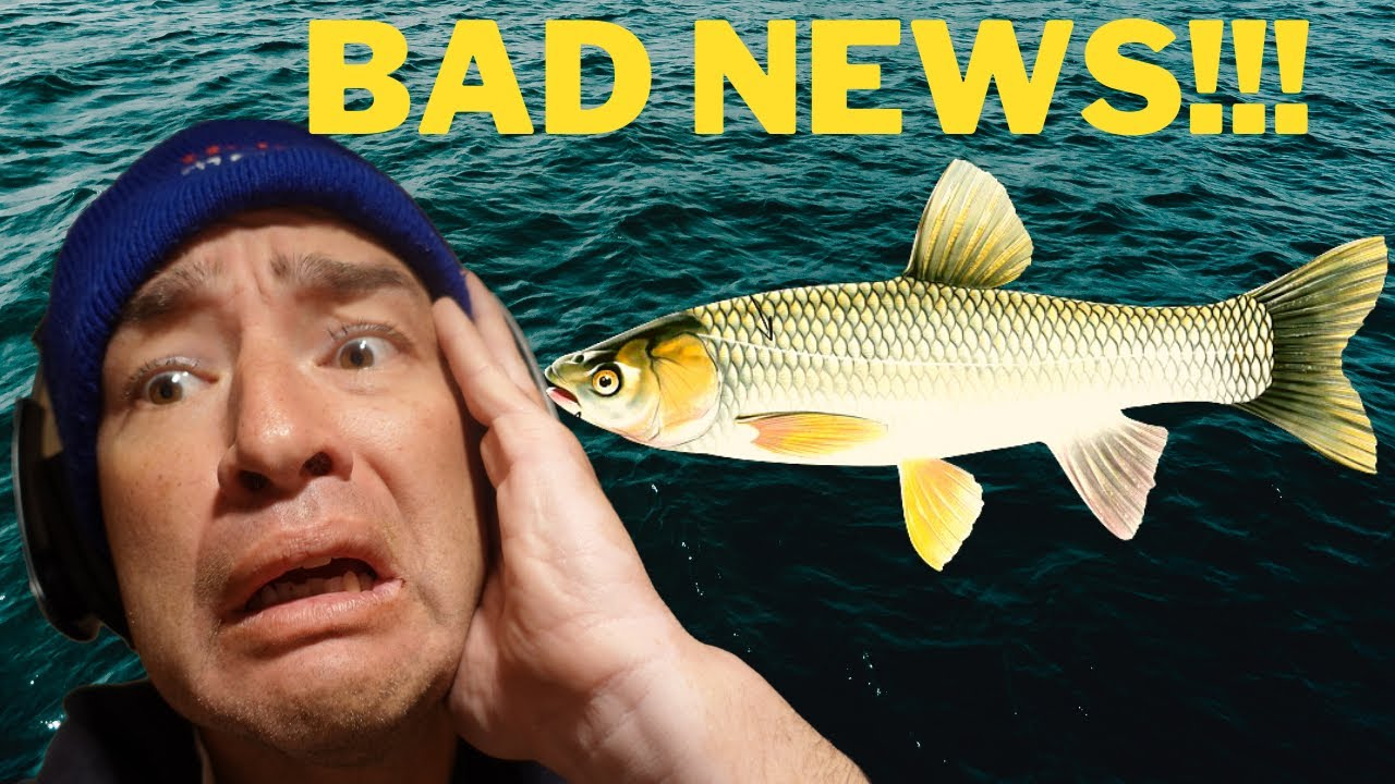 Asian Grass Carp *STOP* the ASIAN Carp INVASION!!!