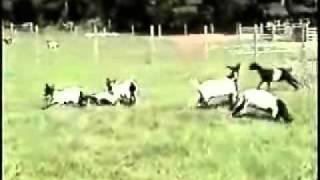 Koze padaju u nesvijest REGIONAL EXPRESS