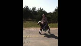 Afternoon ride down road on miniature pony