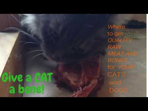 Where to get QUALITY Meat and Bones for your Cats and Dogs