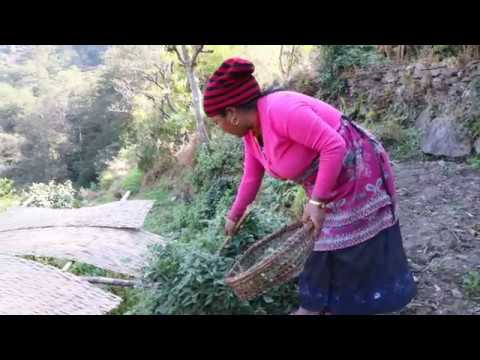 Download Village People Life in Nepal and Nepalese are working in the field.