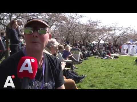 Japanse lente in het Amsterdamse Bos: wel zon, geen bloesem