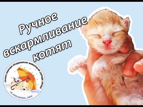 Вскармливание новорожденных котят