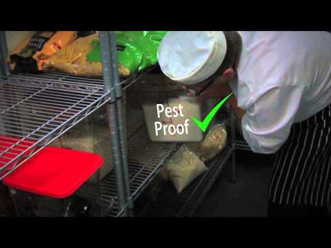 Food safety coaching (Part 3): Pest control