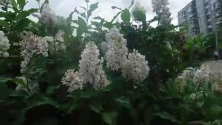 Минусовка антонов не рвите цветы-юрий антонов не рвите цветы.