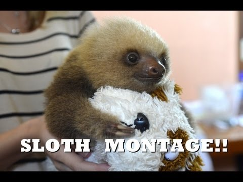 Sloth montage funny cute and adorable youtube - Funny sloth pics ...