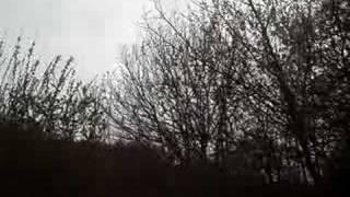 Birdsong of Kilminorth Woods Near Looe