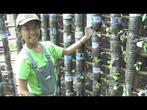 Plastic Bottle Greenhouse Diy