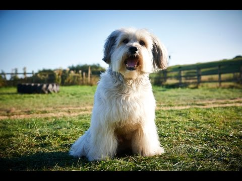 Pudsey the Dog: The Movie (2015) Official Trailer
