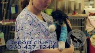 Help For Puppy Found With Broken Legs In Fort Wayne.mp4