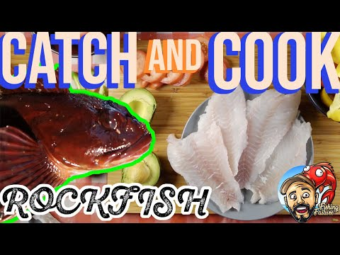 ROCKFISH 🎣🔥 CATCH & COOK 🎉 MY FIRST BIG FISH FROM SHORE 🏖 MONTEREY CALIFORNIA ROCK COD