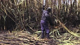 La voz de los sin voz - Violines Negros del Cauca