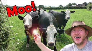 COWS showed us the secret TREASURE! 1500 YEAR OLD Anglo Saxon find!