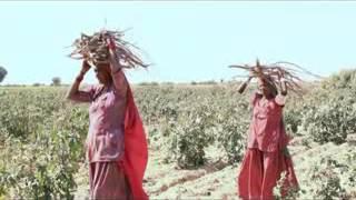 marwadi short film