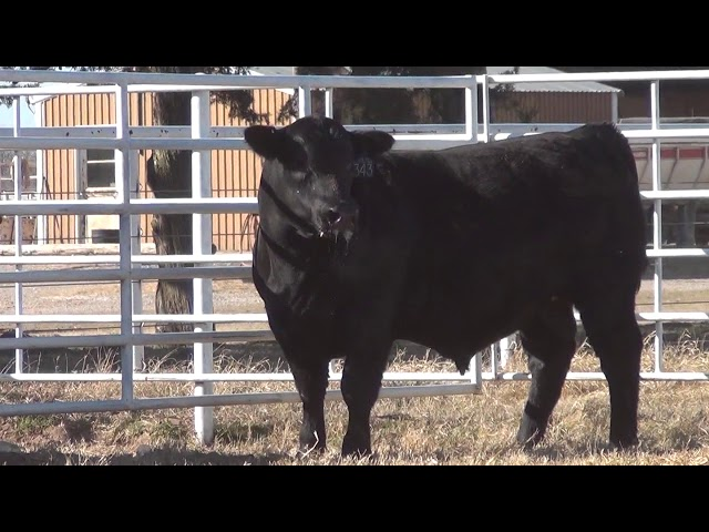 Express Ranches Lot 343