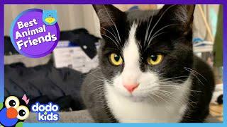 Escape Artist Cat Makes A Hurt Dog Happy Again | Best Animal Friends | Dodo Kids