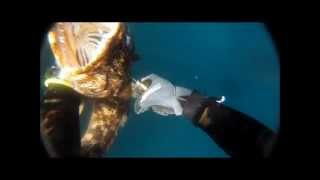 Freedive Spearfishing Monterey California 2012