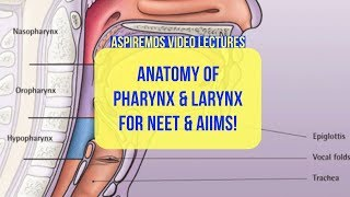 Pharynx and Larynx| Anatomy | NEET | MDS | Aspire MDS Online Course | Video lecture