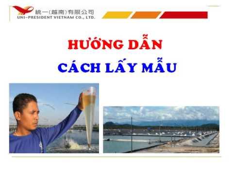 Mẫu Slide đẹp cho thuyết trình_ Nguyễn Chánh Đại
