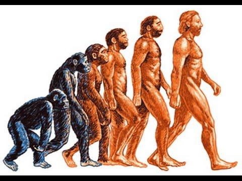 происхождение человека. картинки