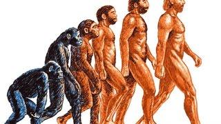 Происхождение человека. Урок биологии.