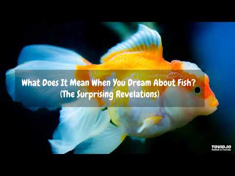 What Does It Mean When You Dream About Fish? (The Surprising Revelations)