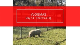 Vlogmas Day 14 - There