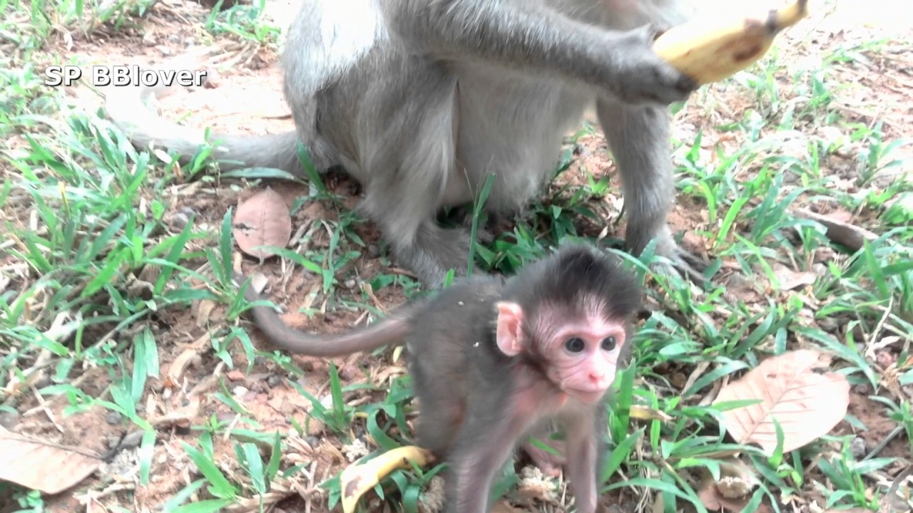 Life Heather Part 14 - Khmer Baby Monkey Joy Want To Bite Baby Heather