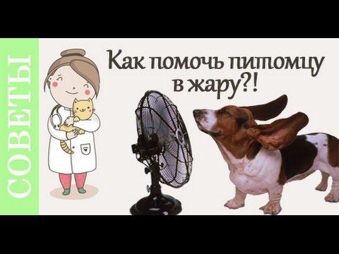 Как помочь собаке в жару. Советы ветеринара.