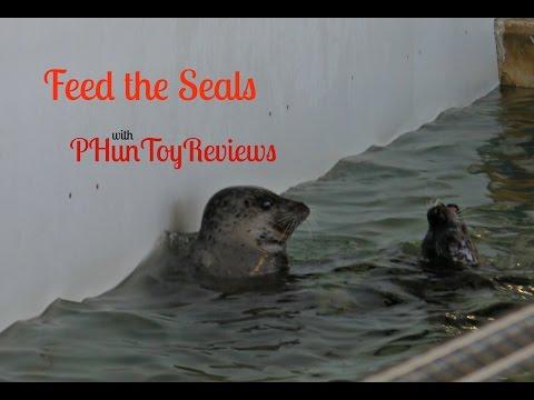 Feeding The Harbor Seals At Seaside Aquarium