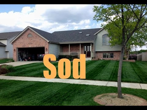 New Sod Fertilizing And Treatment Schedule  New Sod Care