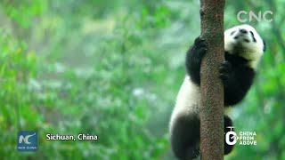 China From Above | Sichuan Giant Panda Sanctuaries