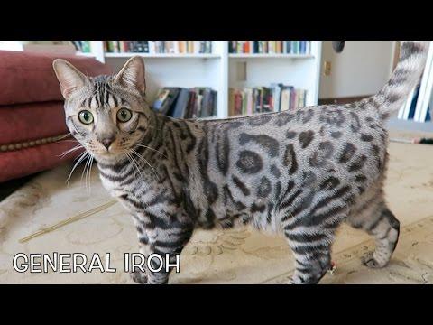 🐯 CAT ADOPTION! A NEW FAMILY MEMBER!!!