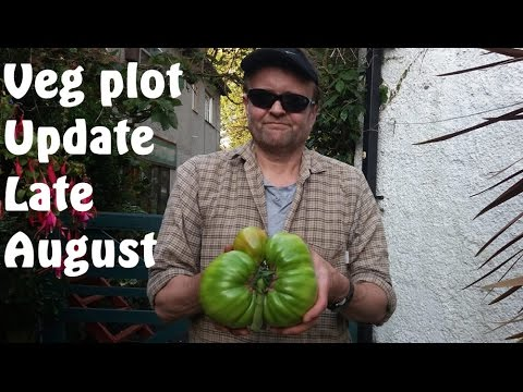 Allotment Diary : Veg Plot, Greenhouse, Polytunnel & Giant Veg Update
