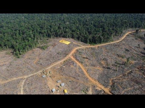 Photo Essay - Rainforest Destruction